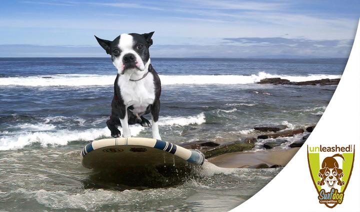 Unleashed surf dog